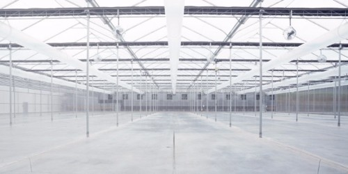The 'Tesla of cannabis' is opening a massive, custom-built marijuana greenhouse