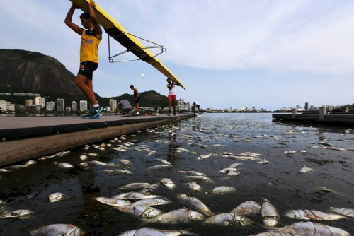 Another waterway near 2016 Rio Olympic Village is suddenly full of dead fish