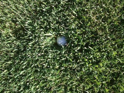This Photo Of The Rough At The US Open Is The Scariest Picture Of Grass You'll Ever See