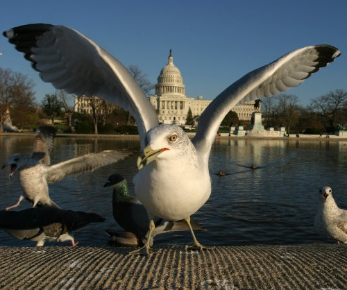 Beautiful Photos Of Wildlife In Washington DC
