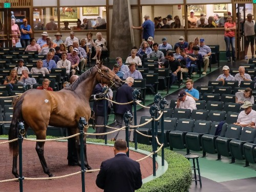 What it's like going to the world's biggest horse sale: Photos - Business Insider
