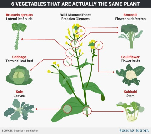 These 6 common vegetables are actually all the same plant species