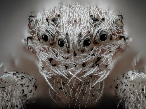 13 creepy photos of the microscopic world around us that will make your skin crawl - Business Insider