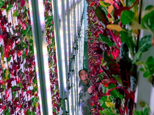 A new Jeff Bezos-backed warehouse farm will grow enough produce to feed over 180,000 people per year