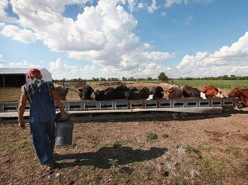 Beyond The Milk Cliff: What Happens If The Farm Bill Expires