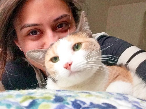 Happy National Love Your Pet Day! Here's 7 quirky cat behaviors and what they mean