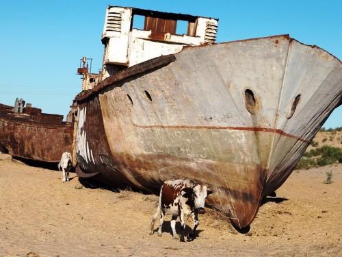 9 incredible photos of an eerie ship graveyard in the middle of the Uzbekistan desert