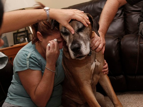 Emotional photos of the last moments between pets and their owners