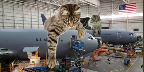 10 pictures of huge cats sitting on military weapons