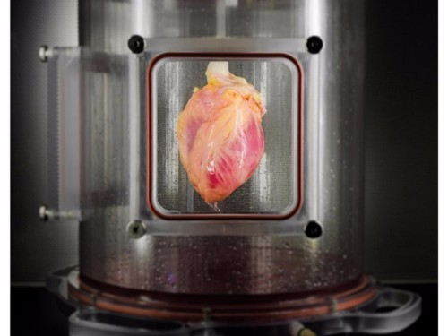 A key breakthrough has brought scientists one step closer to growing transplantable hearts in the lab