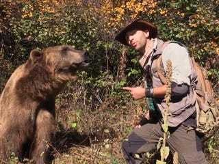 Here's what you should do if you come across a bear in the woods - Business Insider