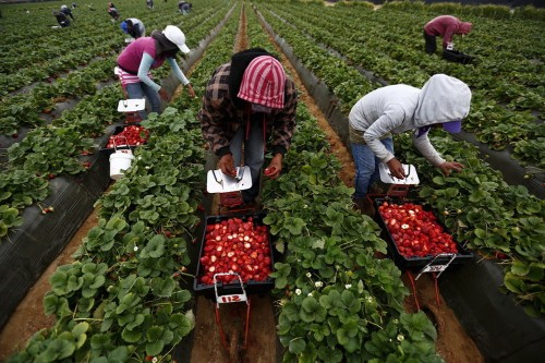 'Our agricultural system would collapse' if Trump starts mass deportations, says farm worker advocate