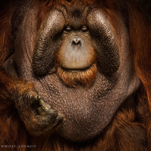 21 Intense Portraits Of Zoo Animals Like You've Never Seen Them Before