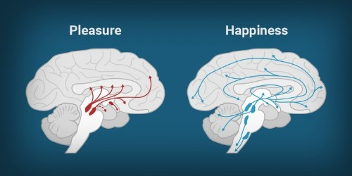 This is why our phones are making us miserable: happiness isn't the same thing as pleasure, and our brain knows it