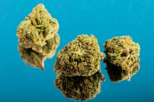 Oregon has 1 million pounds of unsold cannabis, and it reveals the state's marijuana surplus problem