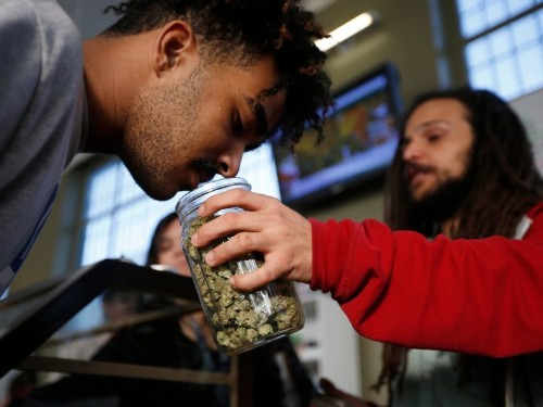 Here's how much marijuana it would take to kill you
