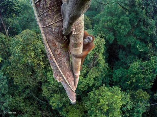 The breathtaking winners of the Wildlife Photographer of the Year awards