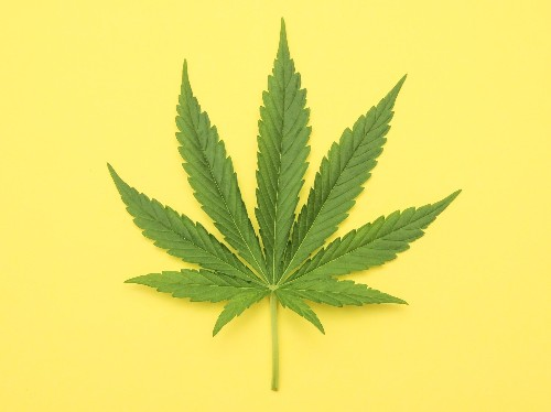 CANNABIS CRED - cover