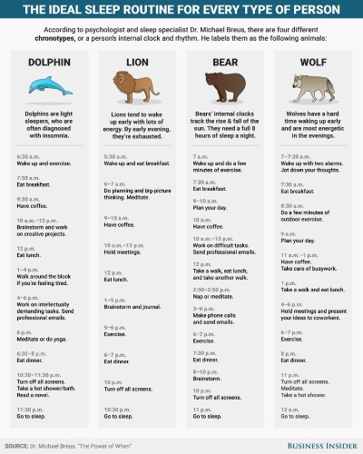 A sleep doctor says 4 types of animals represent how people sleep — and these are the ideal daily routines for each
