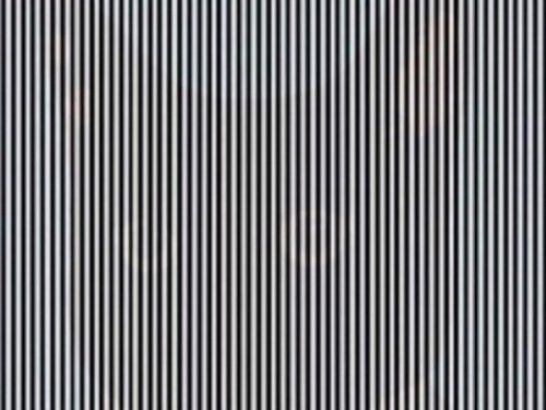 There's an animal hiding in this optical illusion, but you have to shake your head to see it