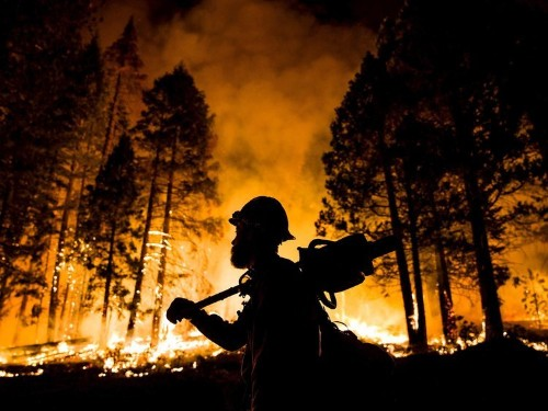 Wildfires have burnt more than 5 million football fields of land already this year