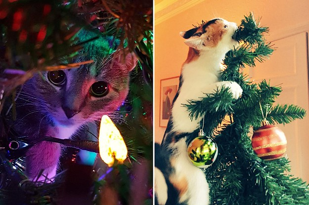 19 Cats In Christmas Trees Whose Prey Is Exclusively Ornaments And String Lights