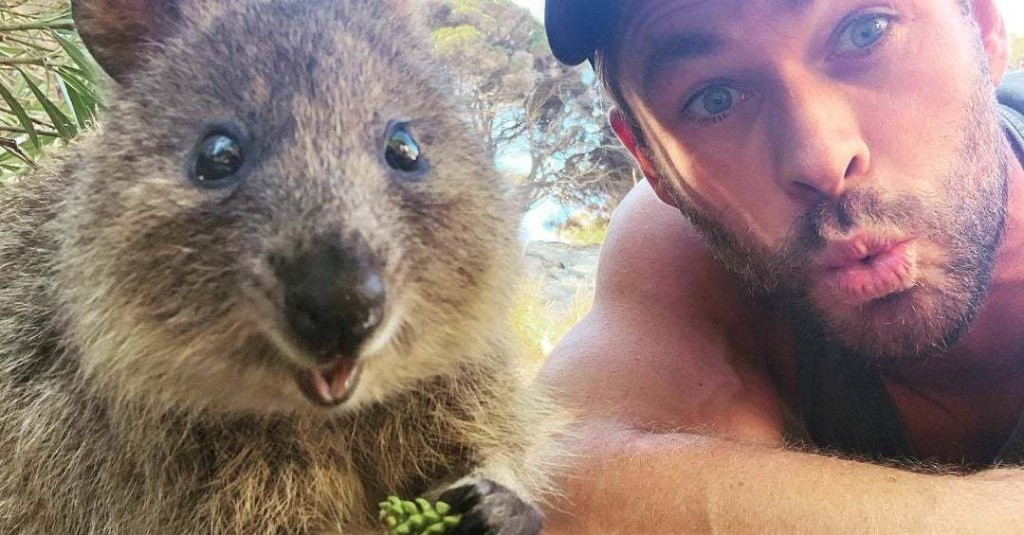 Chris Hemsworth Becoming BFFs With This Furry Little Animal Is The Best Thing I've Seen All Day