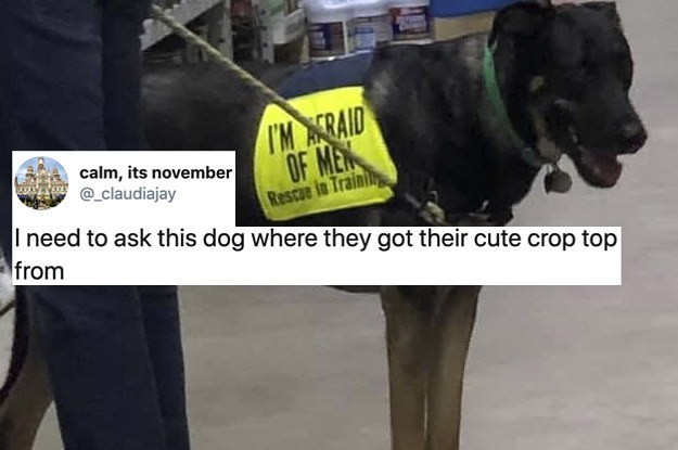 50 Hilarious Dog Tweets From 2019 That Went Viral