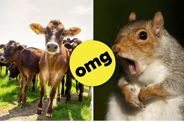 17 Sad Animal Facts That Will Get You Very Emotional
