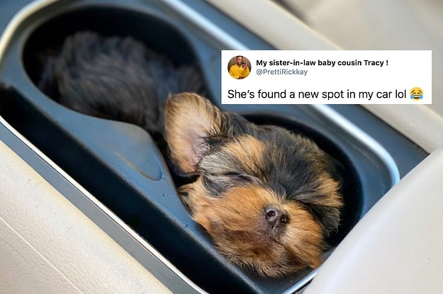 19 Heartwarming And Hilarious Tweets About Animals That Made Me Feel Better This Week