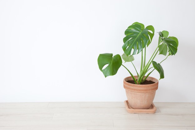 You're Only A True Plant Lady If You Can Identify These Houseplants