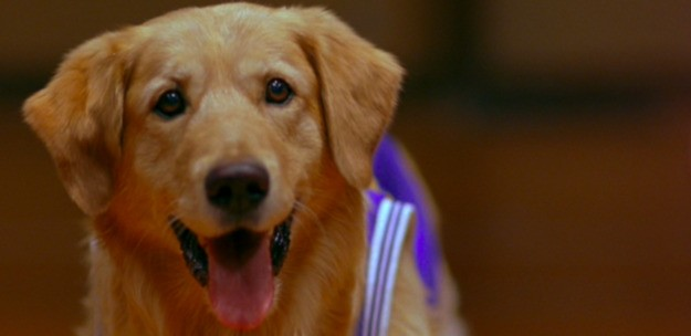 Only A True Dog Expert Will Get 11/16 On This Movie Quiz