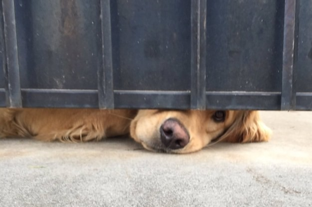 People Are In Love With This Dog Who Waits For A Girl After School Every Day