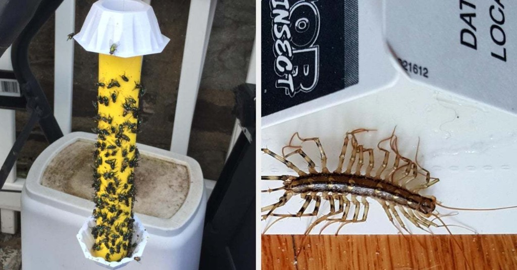16 Useful Things That'll Help Banish Creepy, Crawly Critters From Your Home