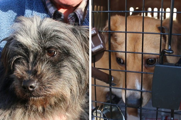 These Adorable Pups Have All Been Rescued From A Dog Meat Farm