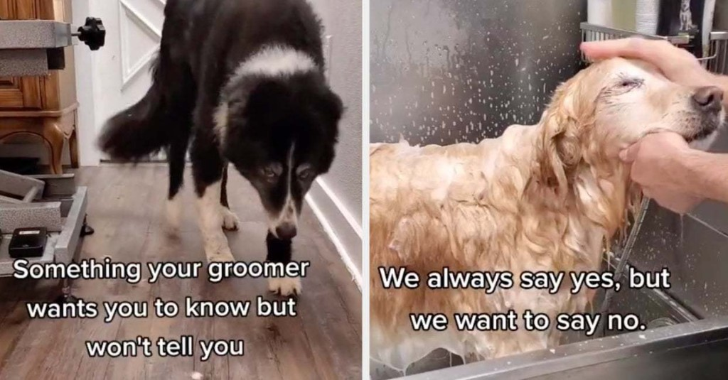 """This """"Things Your Dog Groomer Won't Tell You"""" TikTok Is Going Viral Because The Message Is So Important"""