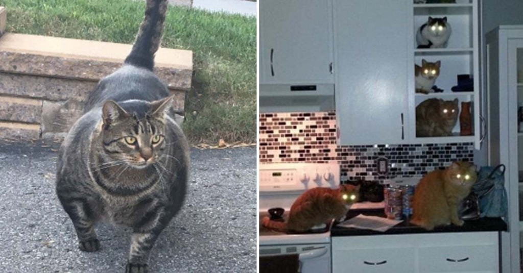 18 Tweets That Prove Cats Can — And Will — Overthrow The Human Race