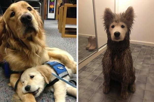 17 Dog Posts To Get You Through This Long January Week