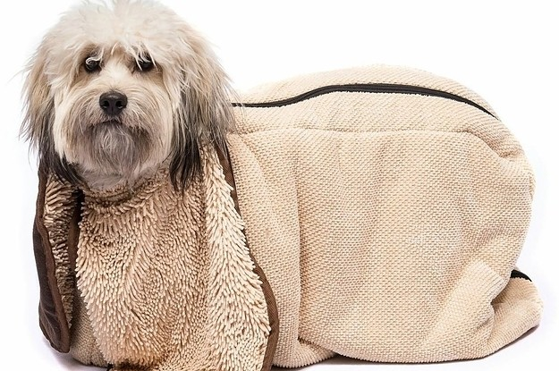 23 Futuristic Pet Products You Had No Idea You Needed