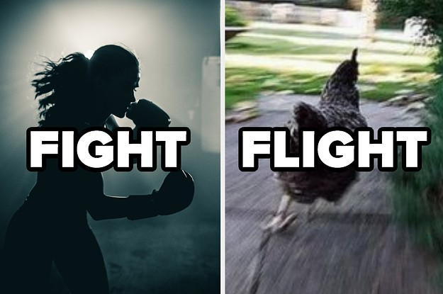 Are You More Fight Or Flight?