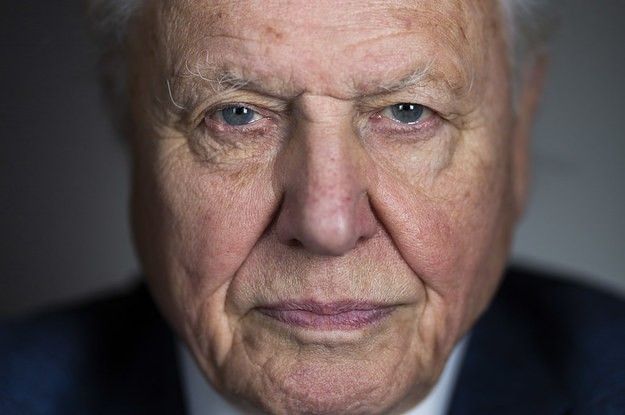 "Sir David Attenborough Urges Young People To Look Up From Their Screens At The ""Great Treasure"" Of The Natural World"