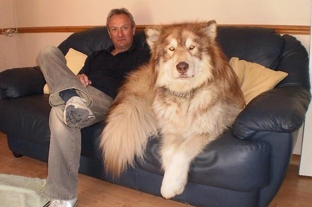 18 Dogs That Look Freakishly Human