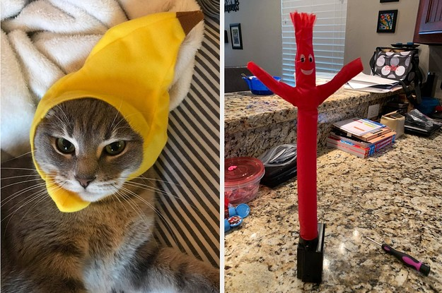 27 Cute Things To Help Cheer You Up If You're Already Over 2020