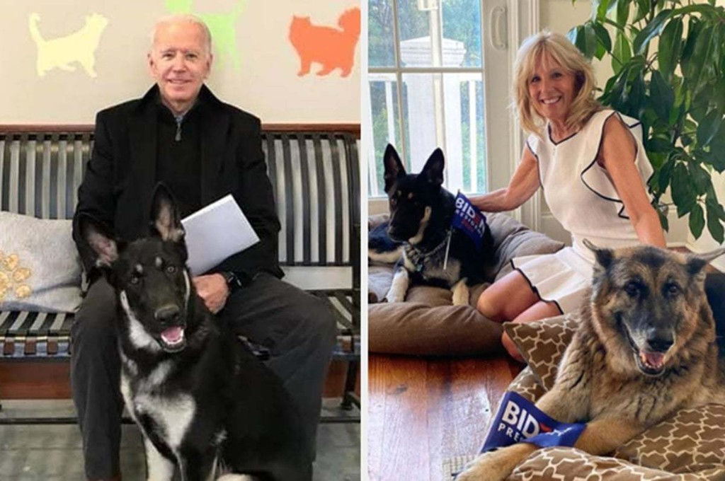 Biden's Dog Major Will Be The First Shelter Dog In The White House