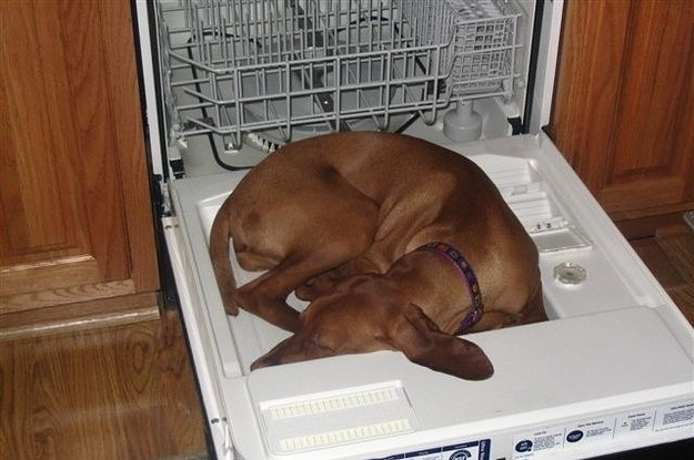 21 Dogs Who Will Sleep Wherever They Damn Well Please