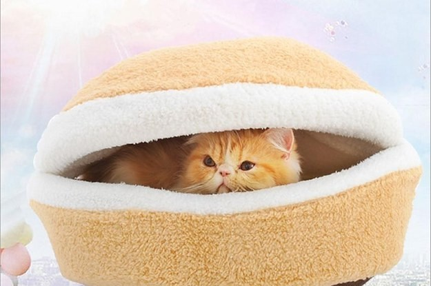 18 Gifts That Will Definitely Make Your Cat Love You More