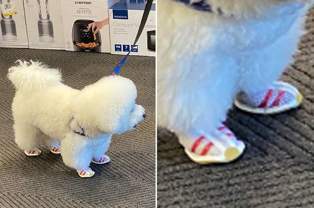 15 Dog Posts To Make This Week Extra Goob