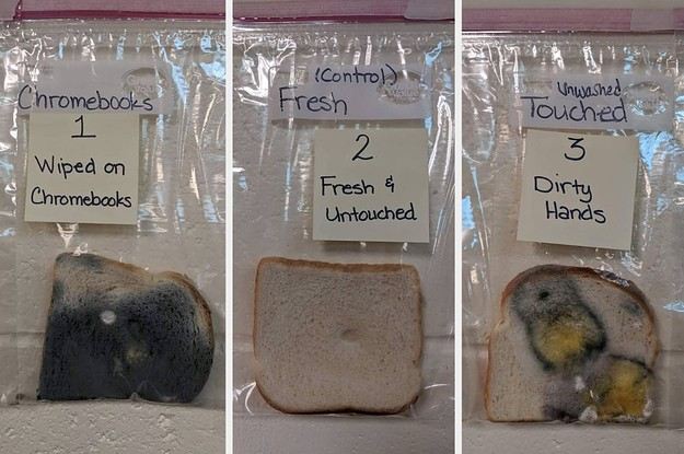 This School Did A Germ Experiment With Bread And The Results Are Disturbing