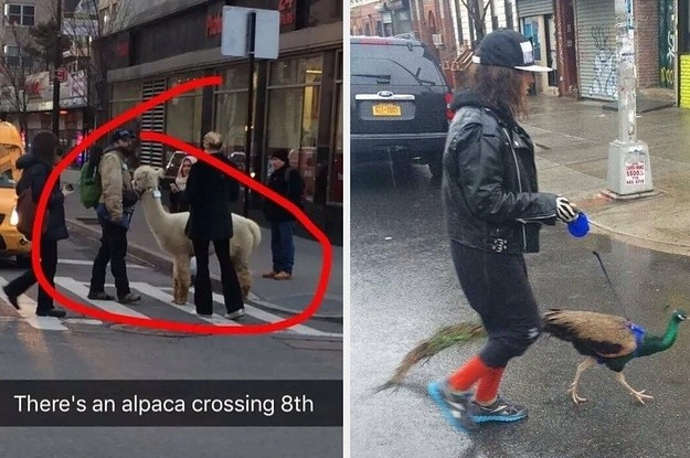 The 33 Most Incredibly New York Things That Have Ever Happened