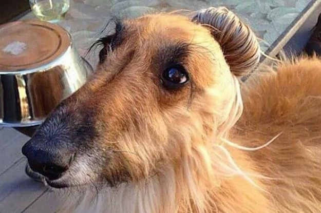 This #DogBun Trend Is The Cutest Thing To Happen To The Internet